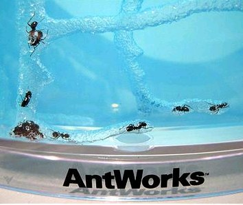 ant_works