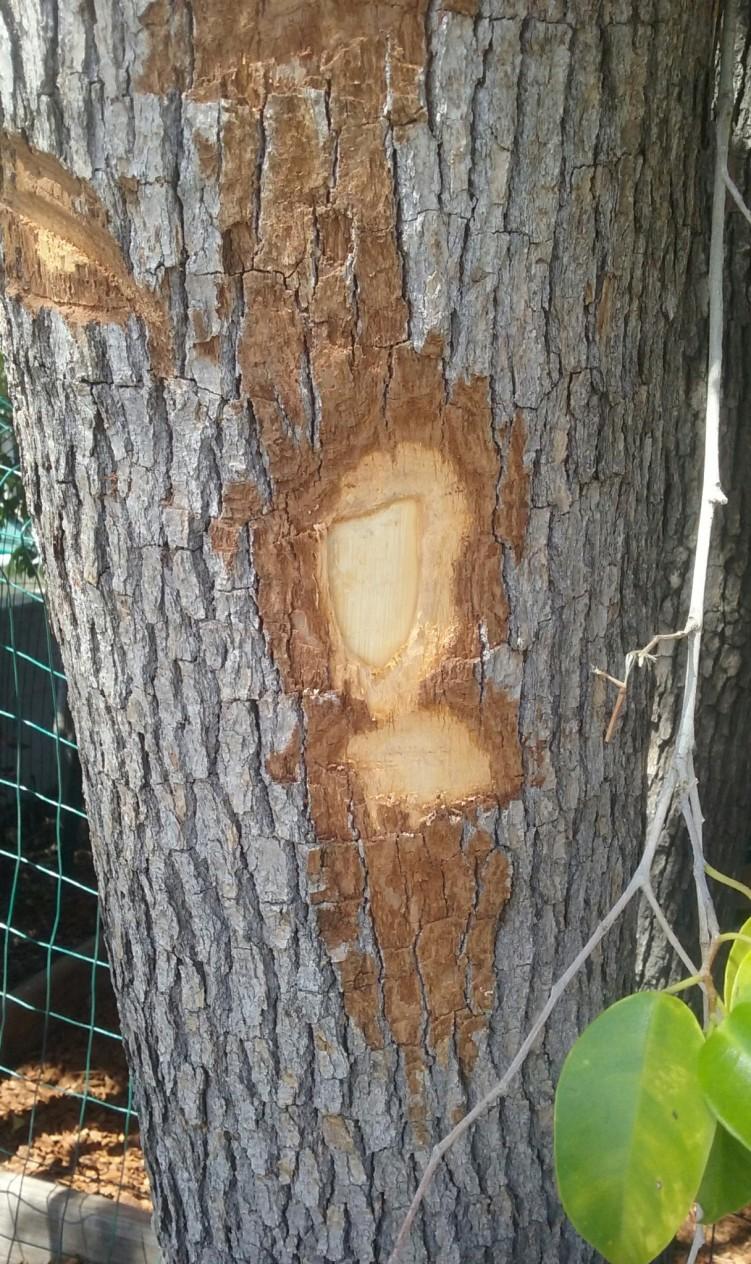 treew4