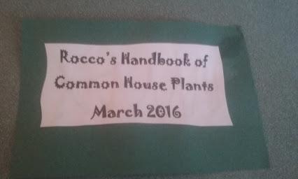 rocco8